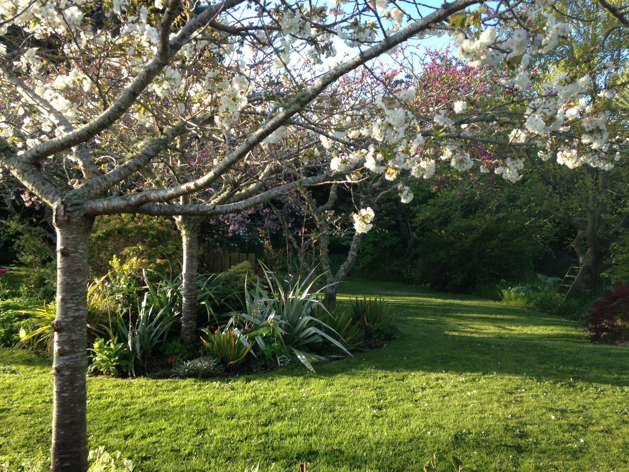 Bed-and-breakfast-whanganui- gardens